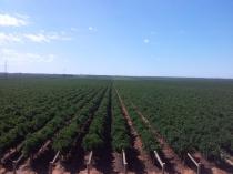 Grapevine rows.