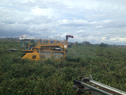 Grape Harvester with Driver and Observer!